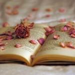 本を読んで「どれが正解なの?」と迷子になっている方へ。私なりの本の読み方。