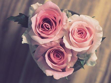 rose-3072698__340 (1)